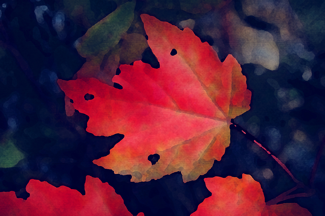Leaf,Red,Nature