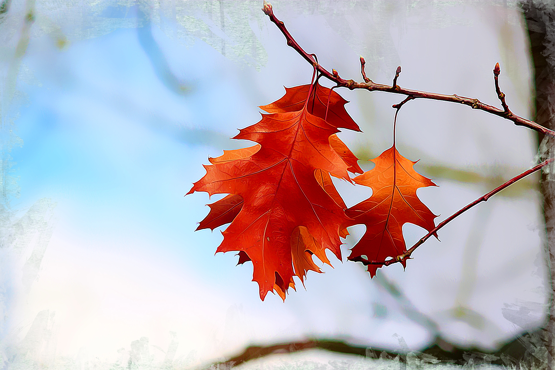 Leaf,Tree,Red