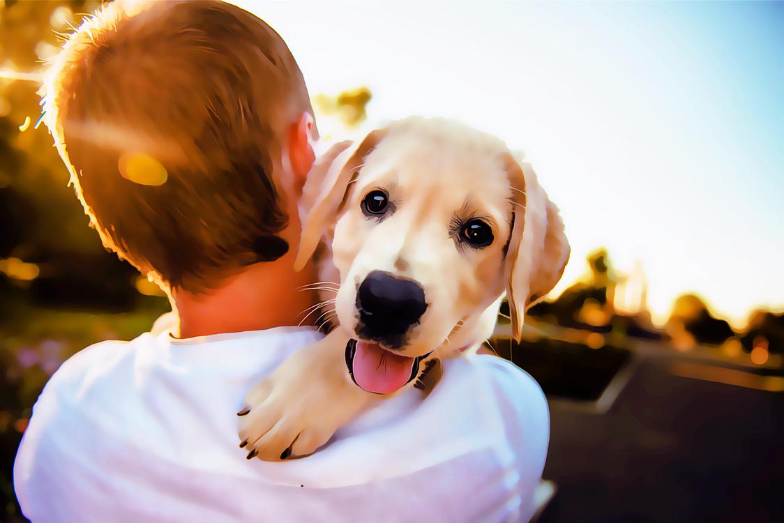 Dog,Dog Breed,Retriever