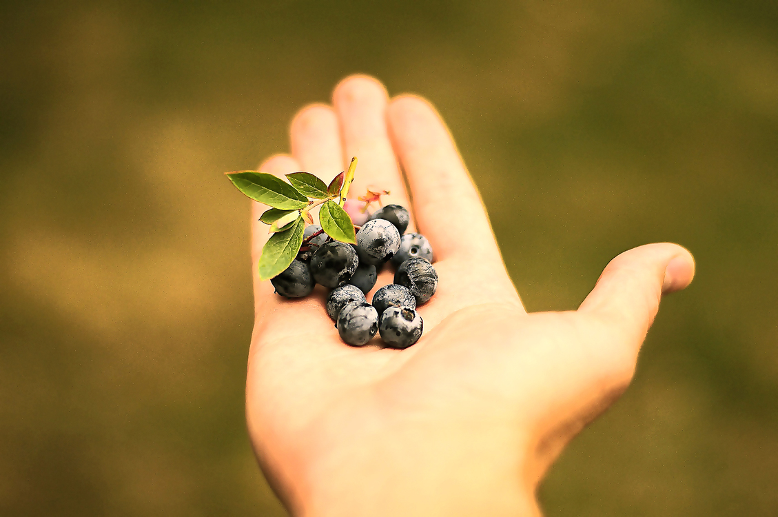 Blackberry,Hand,Berry