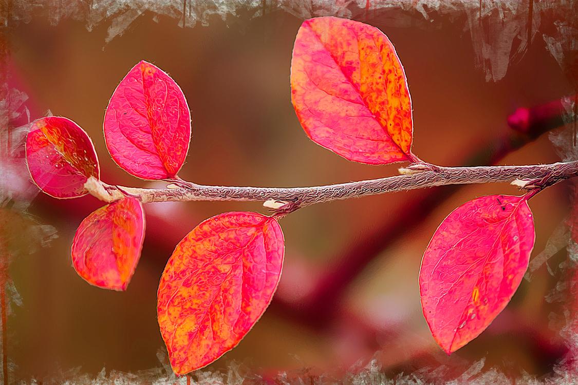 Leaf,Branch,Red