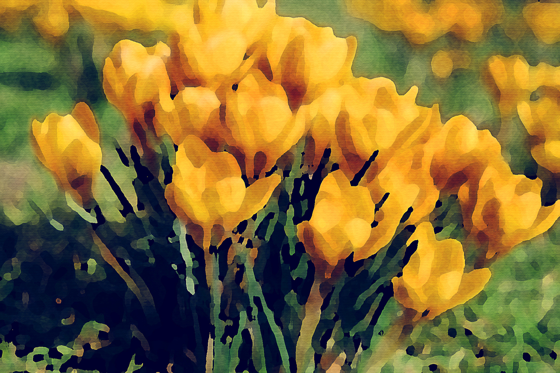Flower,Yellow,Watercolor Paint