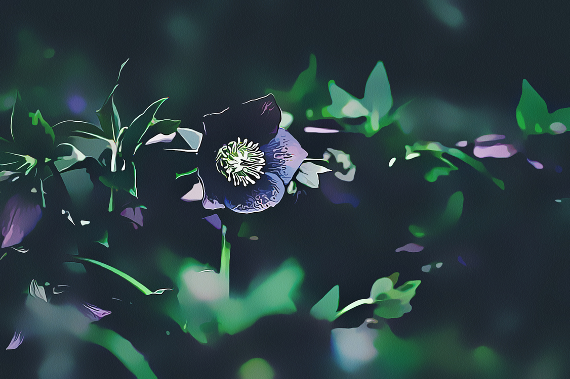 Flower,Purple,Plant