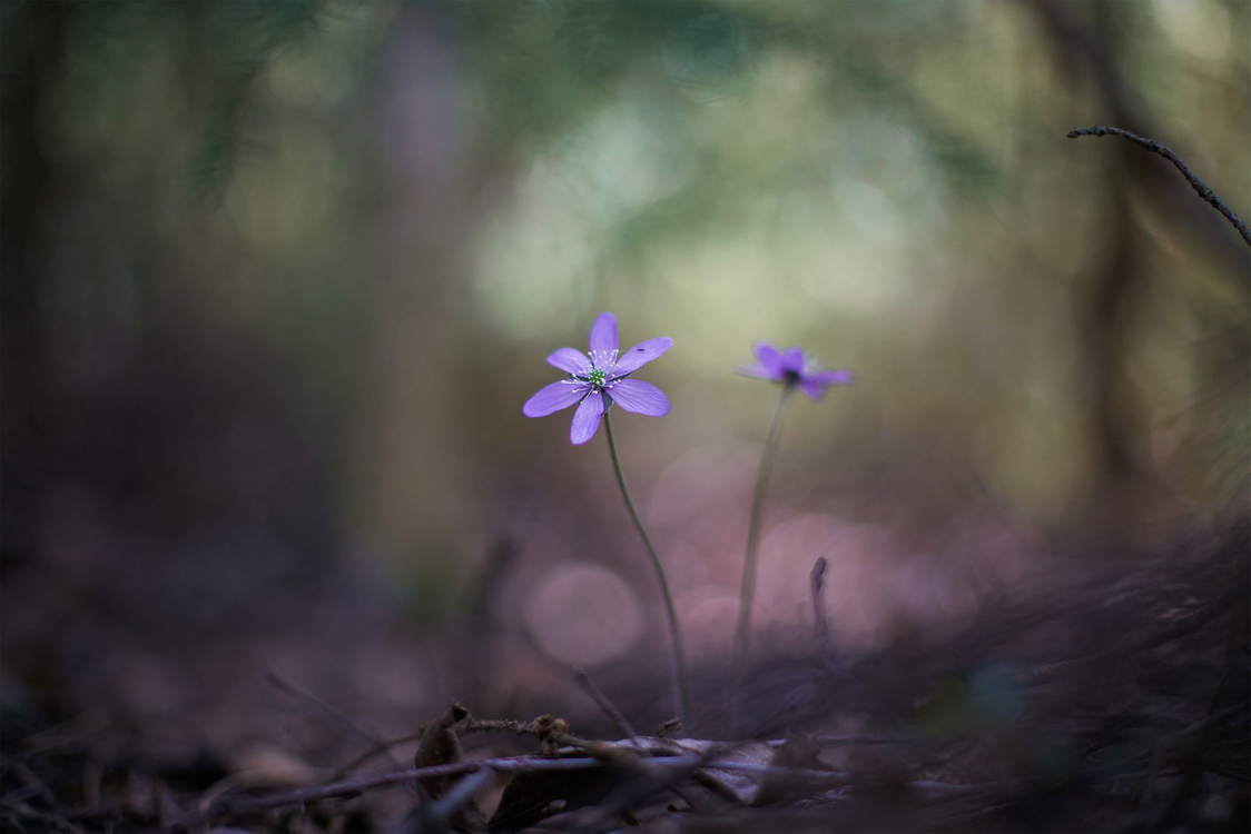 Nature,Flower,Purple