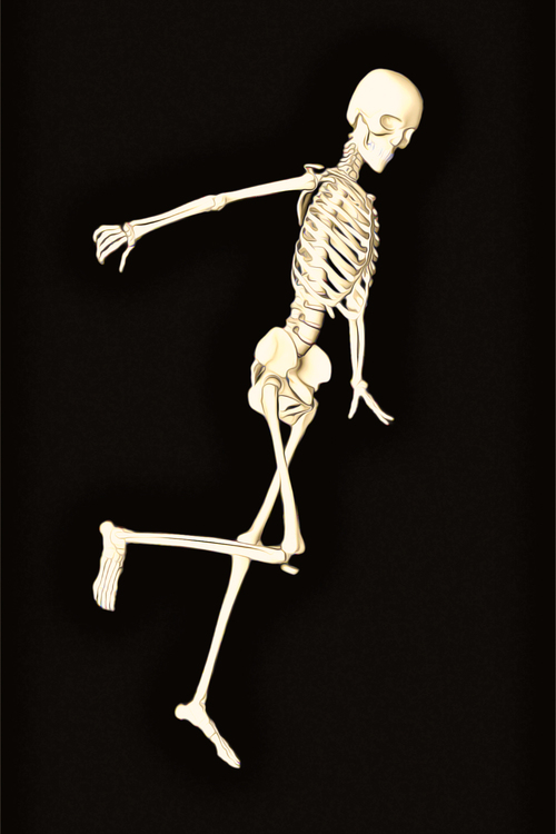 Skeleton,Joint,Human Body