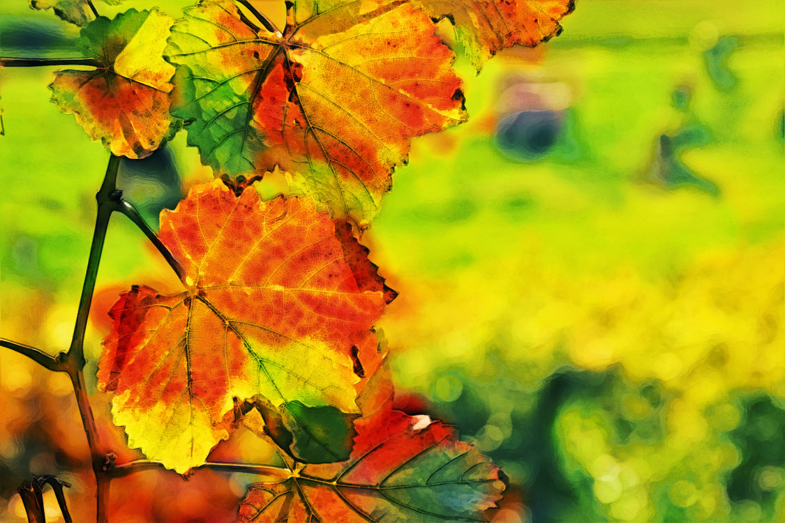 Leaf,Nature,Green