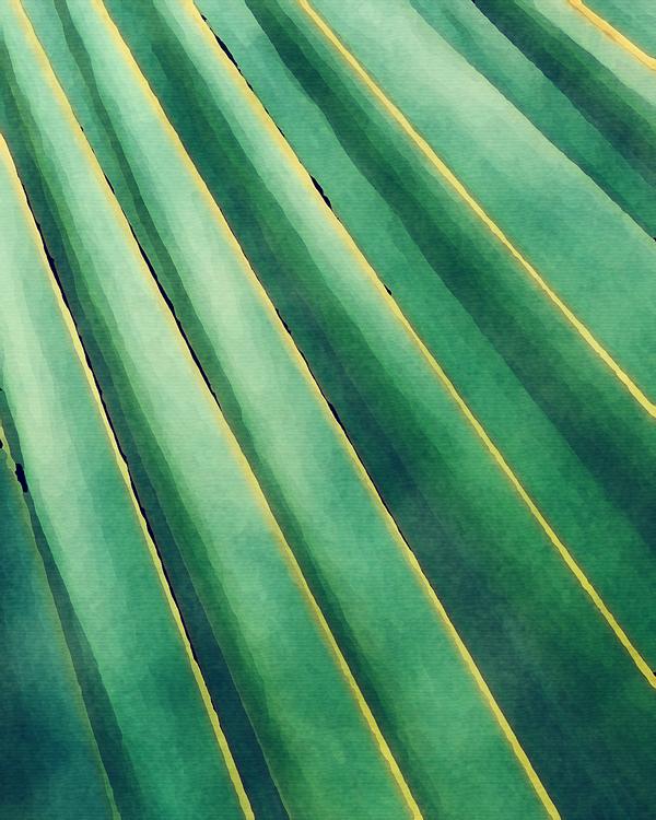 Green,Leaf,Turquoise