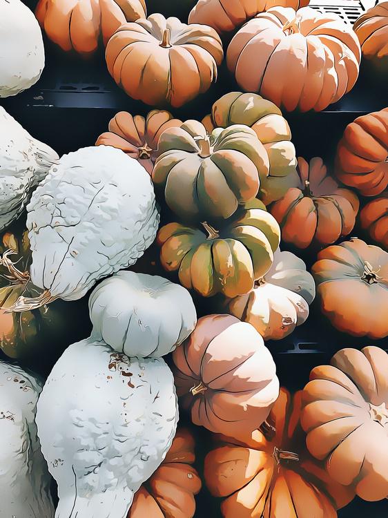 Winter Squash,Pumpkin,Cucurbita