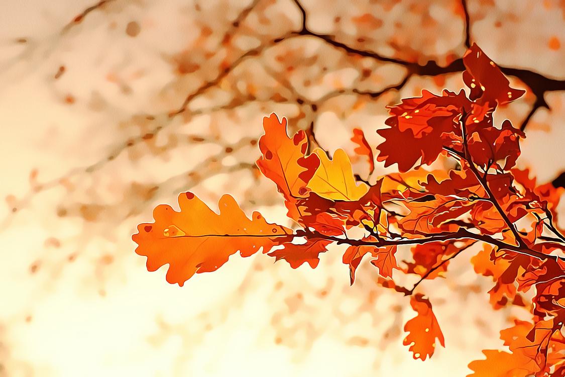Leaf,Tree,Branch