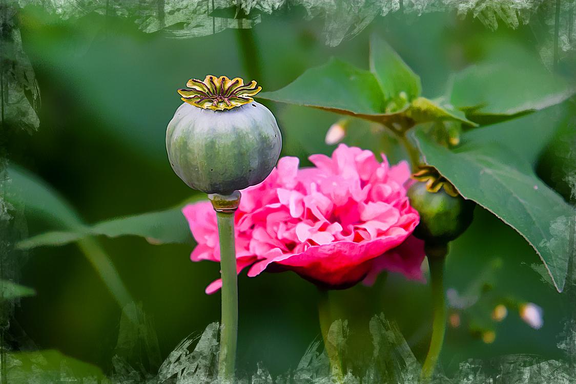 Flower,Plant,Petal