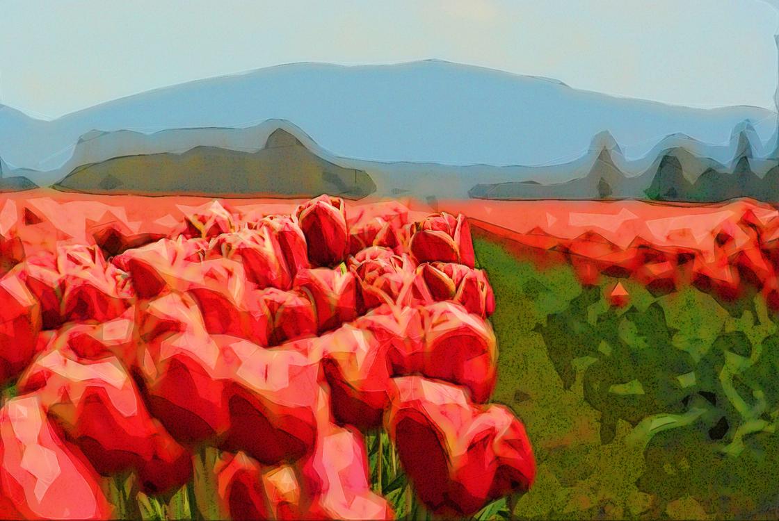 Flower,Red,Natural Landscape