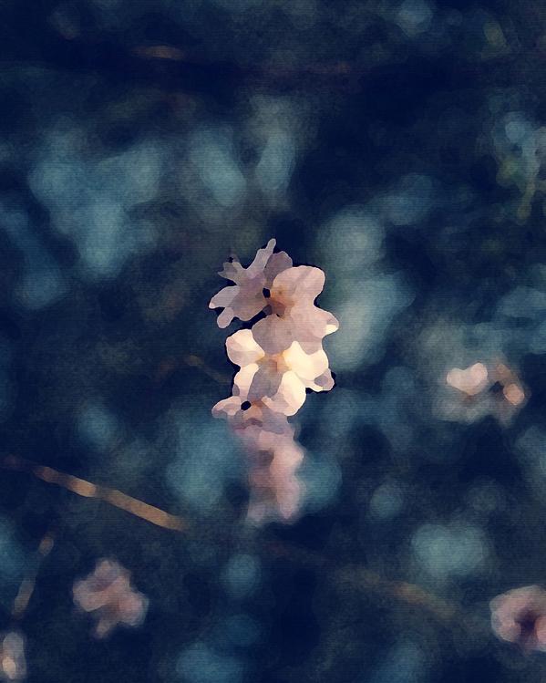 Sky,Flower,Spring