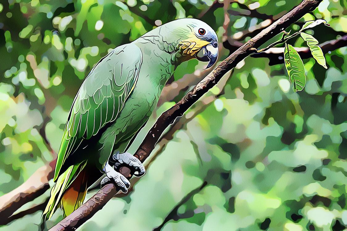 Bird,Parrot,Beak