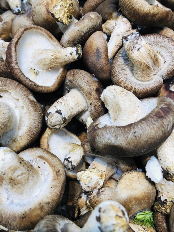 Champignon Mushroom,Matsutake,Edible Mushroom