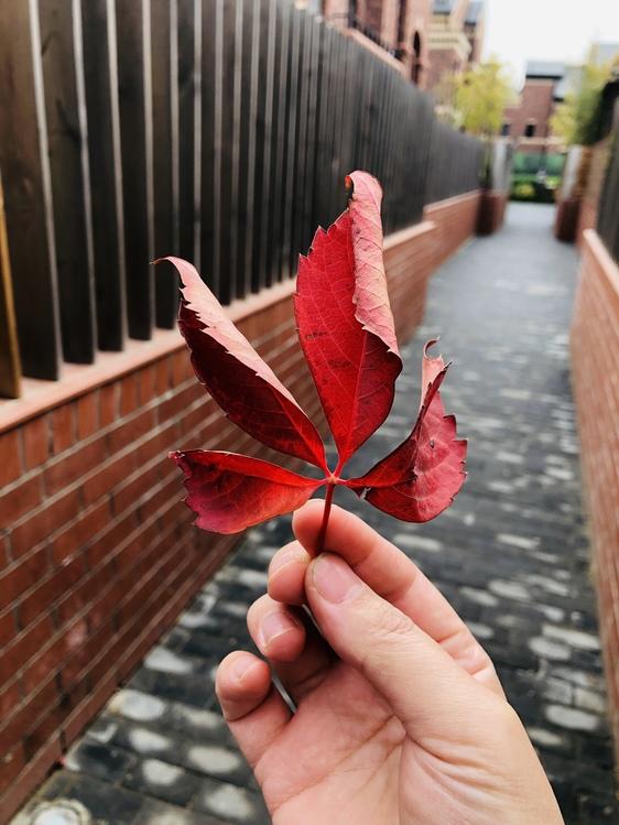Leaf,Finger,Plant
