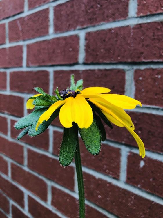 Flower,Yellow,Wall