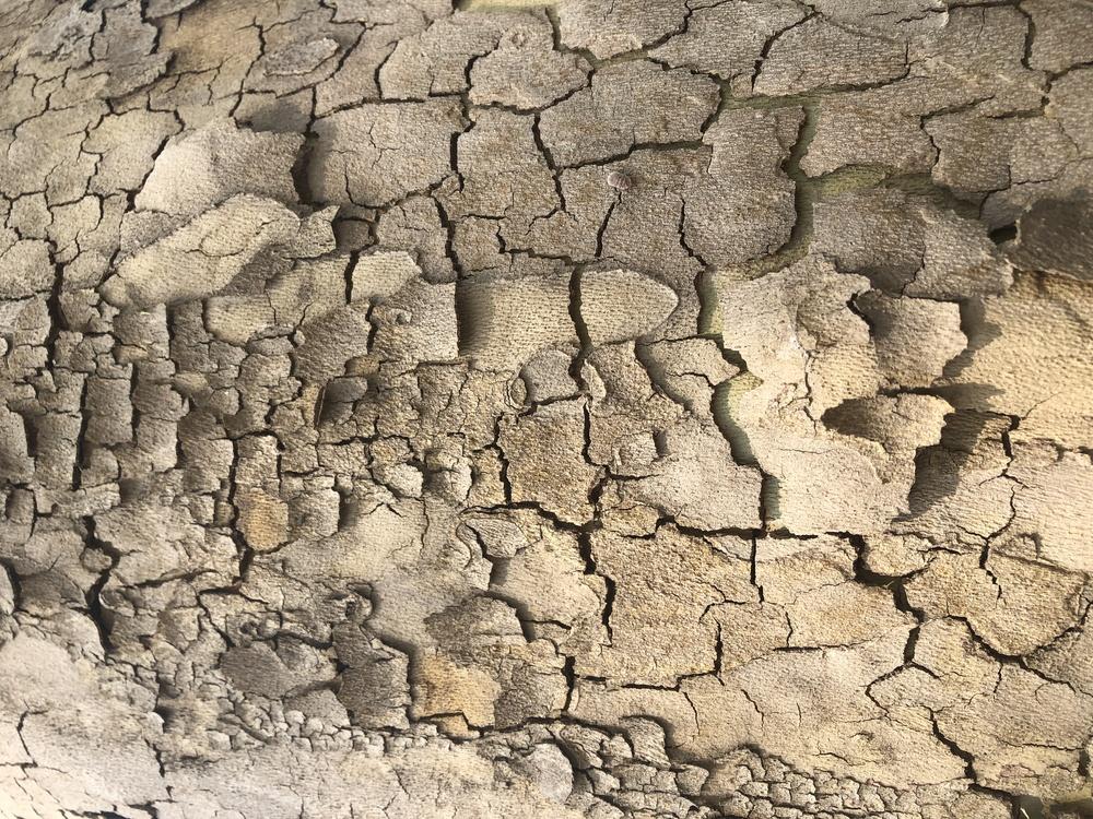 Stone Wall,Soil,Wall