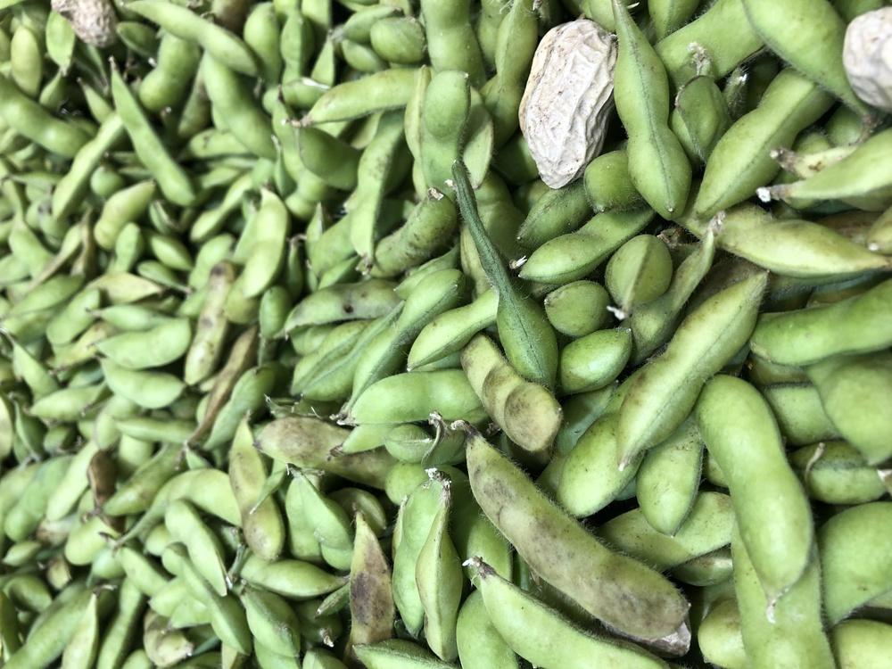 Broad Bean,Edamame,Vegetarian Cuisine