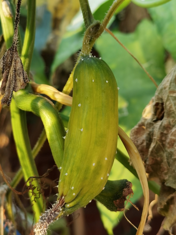 Plant Stem,Plant Pathology,Flora