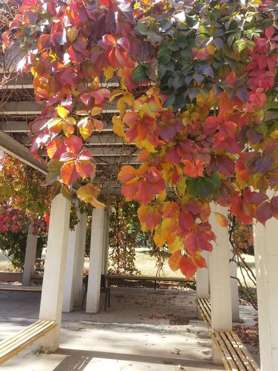 Leaf,Tree,Autumn