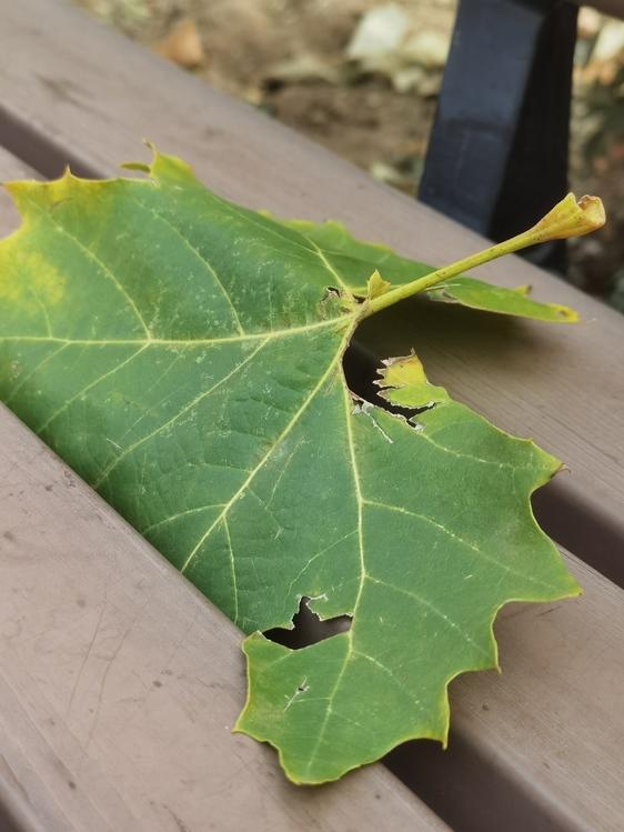 Plant Stem,Leaf,Plant Pathology