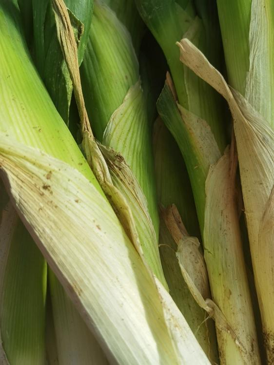 Corn On The Cob,Sweet Corn,Plant Stem