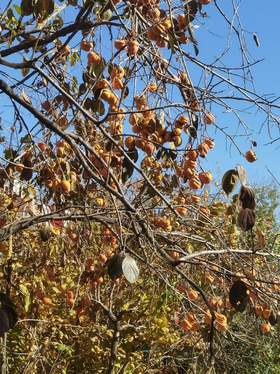 Leaf,Twig,Tree