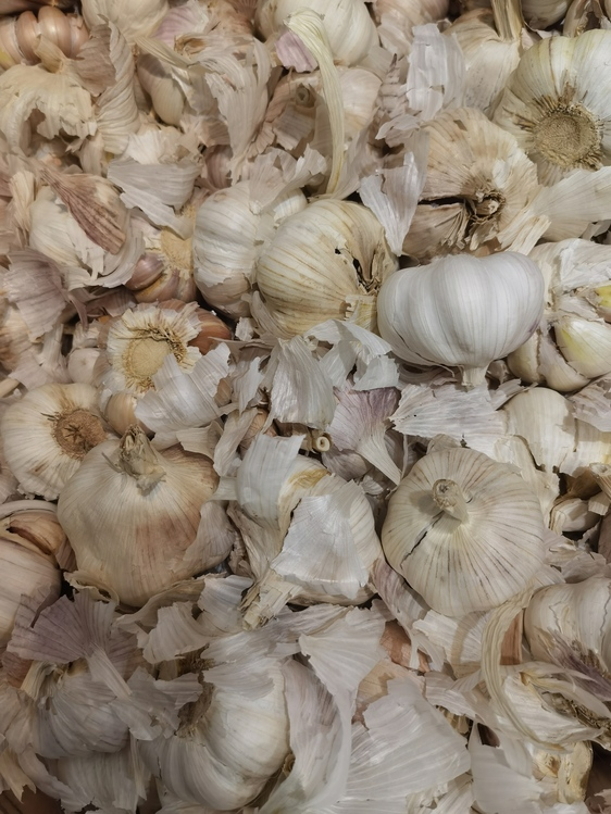 Elephant Garlic,Garlic,Others