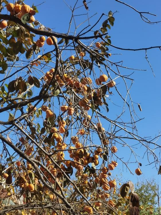 Deciduous,Twig,Tree