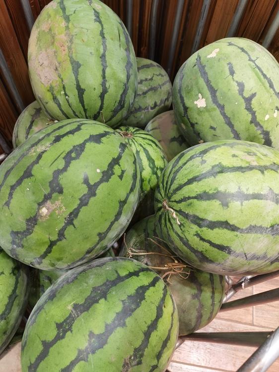 Squash,Watermelon,Winter Squash