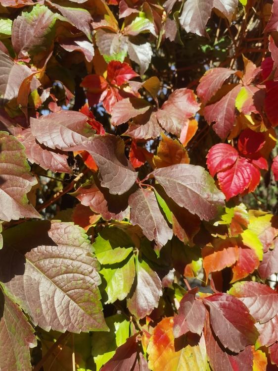 Leaf,Autumn,Tree