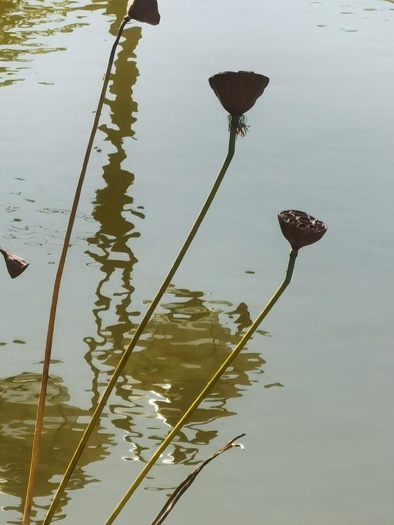 Leaf,Flora,Water