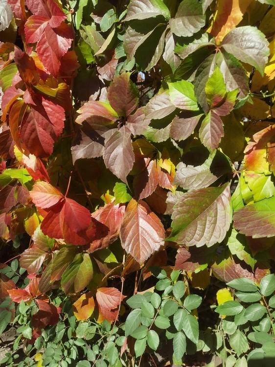 Leaf,Shrub,Groundcover