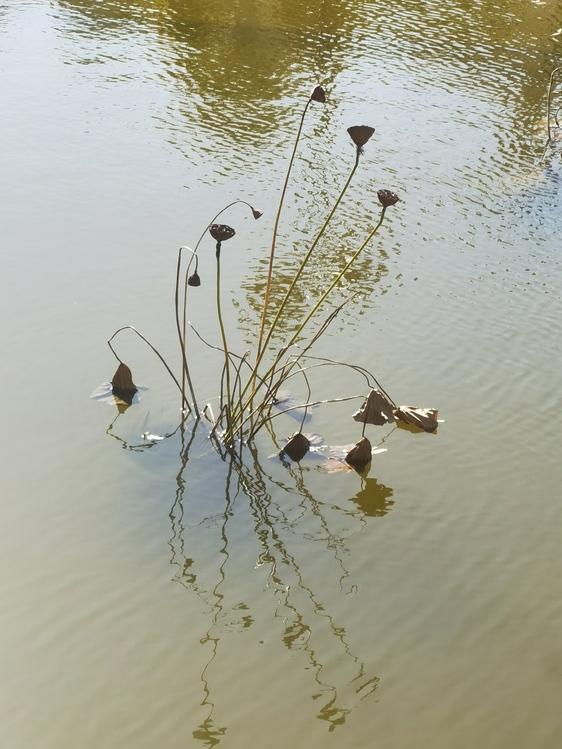 Duck,Birds,Water Bird